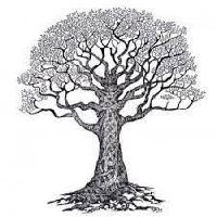 symbole_arbre_de_vie.jpg